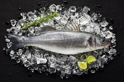 Wild Sea Bass (1kg) سمك قاروص