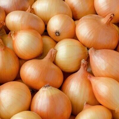 Organic Yellow Onions (1kg) بصل أصفر اورجانيك
