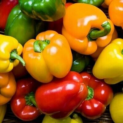 Organic Mixed Sweet Peppers (500g) فلفل حلو مشكل اورجانيك
