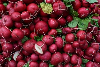 Red radish (500 gm) فجل احمر