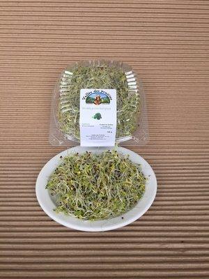 Germination mélange de brocoli bio