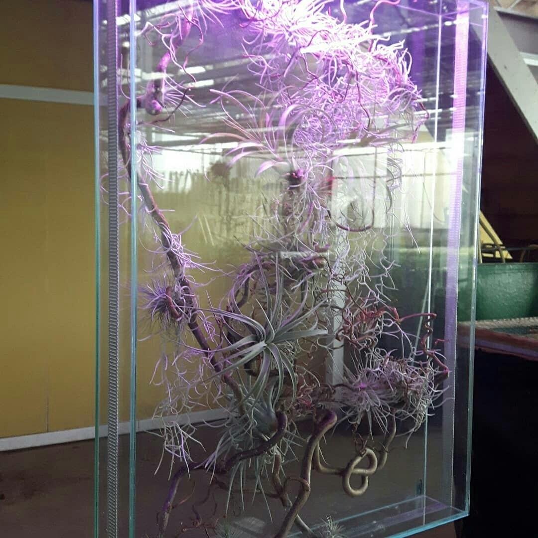 Balie scherm met mini ecosysteem planten en groeilamp