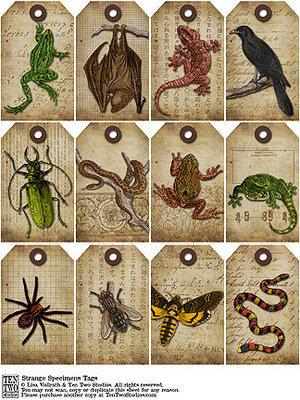 Strange Specimens