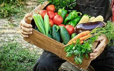 CSA Produce Box – Small Weekly Subscription (Wednesday June 10, 3-5PM Pickup)