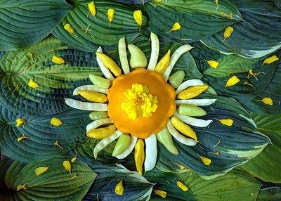 Sol Hot Gogh