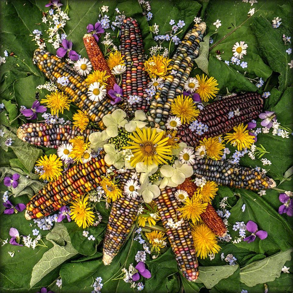 Wildflower Burdock Sun