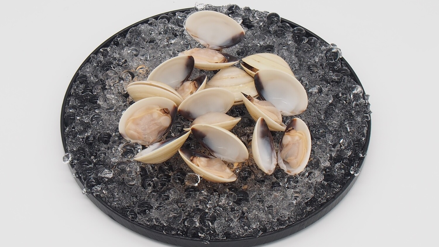 White Clam with Shell