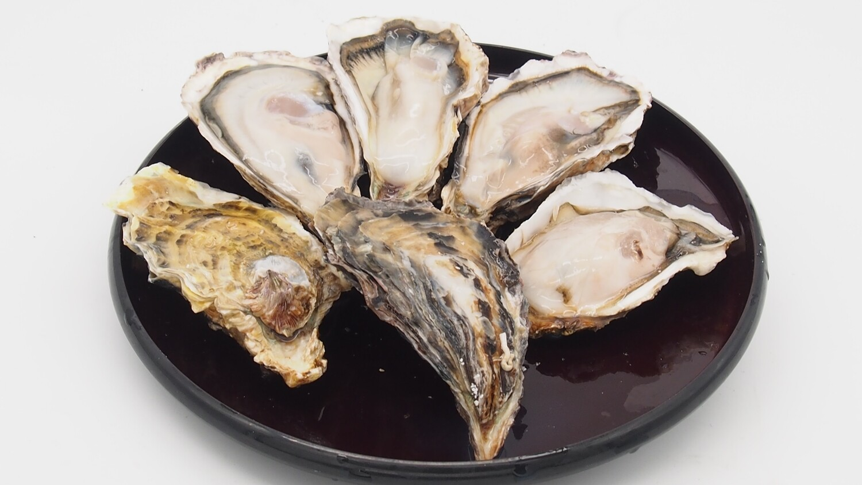 Frozen Japan Murotsu Whole Shell Oyster (Sashimi Grade)