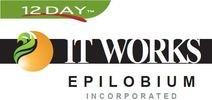 Epilobium