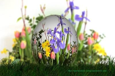 The flowers in the egg