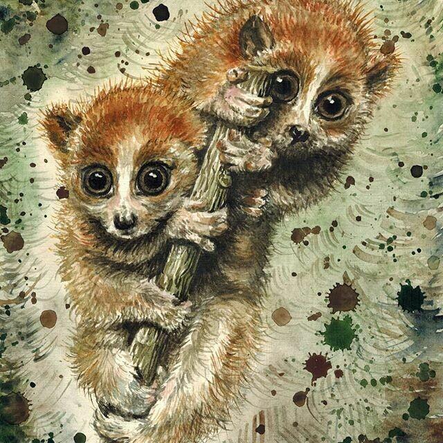 Lemurs. Лемуры