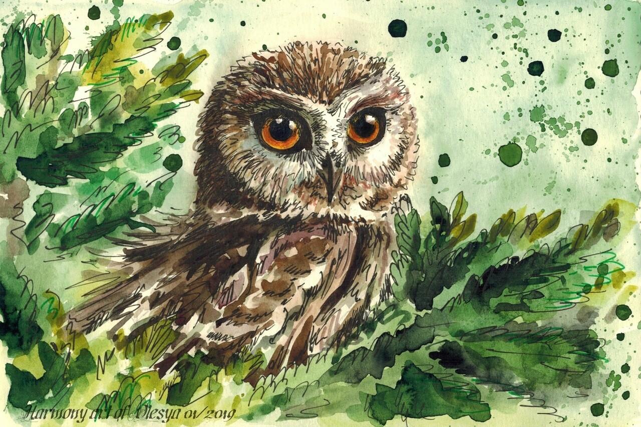 New. Owl