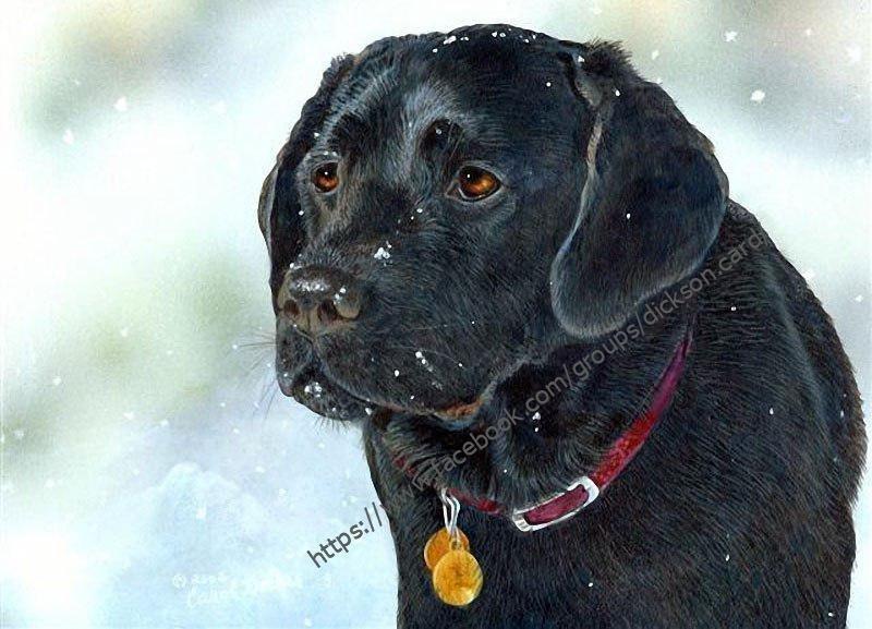 Dog with a medallion from © Carol Decker