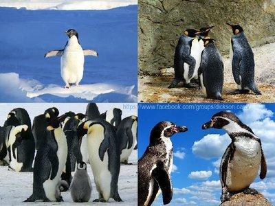 Penguins, collage