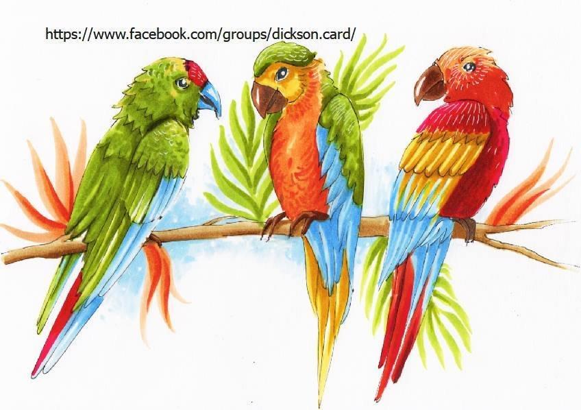 Colored parrots © Maria Shishcova