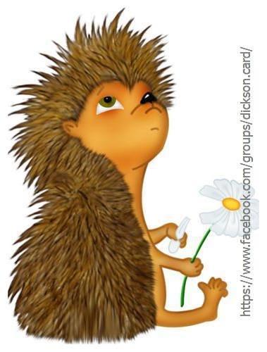 Hedgehog wonders on daisy