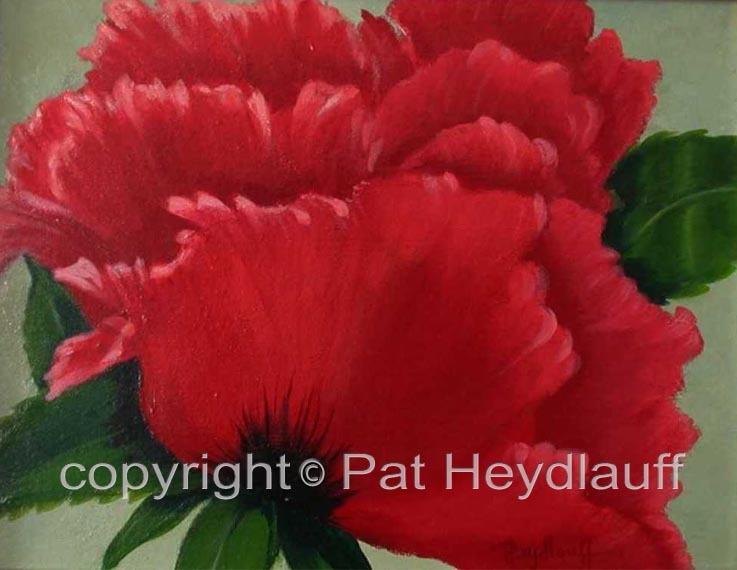 Ruffled Poppy CNV125 / 14x11