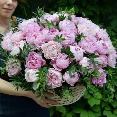 65 розовых пионов с зеленью