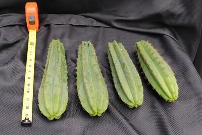 Cool cactus set #2