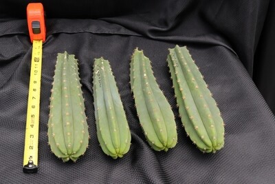 Cool cactus set #3