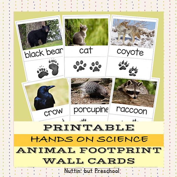 Animal Footprint Wall Cards