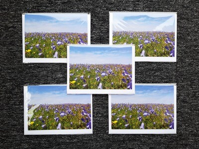 Greeting cards - pack of 5 Bluebells