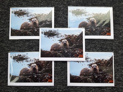 Greeting cards - pack of 5 Otter