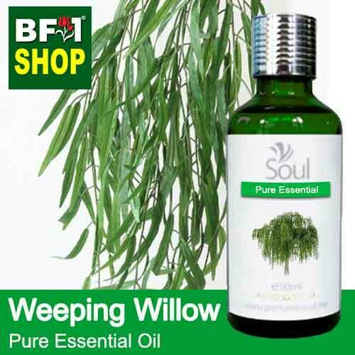 Pure Essential Oil (EO) - Weeping Willow Essential Oil - 50ml