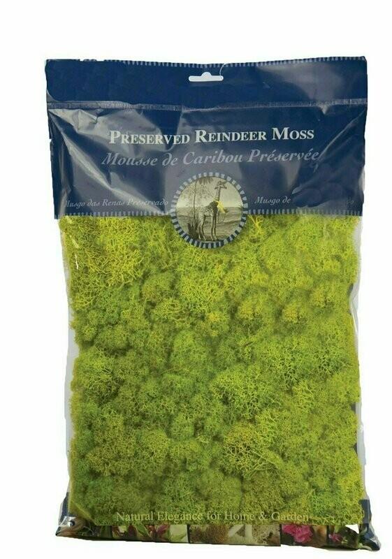 21669 - 1/2 lb Bag Chartreuse Reindeer Moss