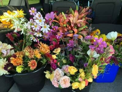 Grow-Your-Own Cut Flower Summer Plant Collection