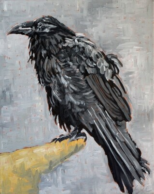 Raven 2, oil on canvas, 20x16
