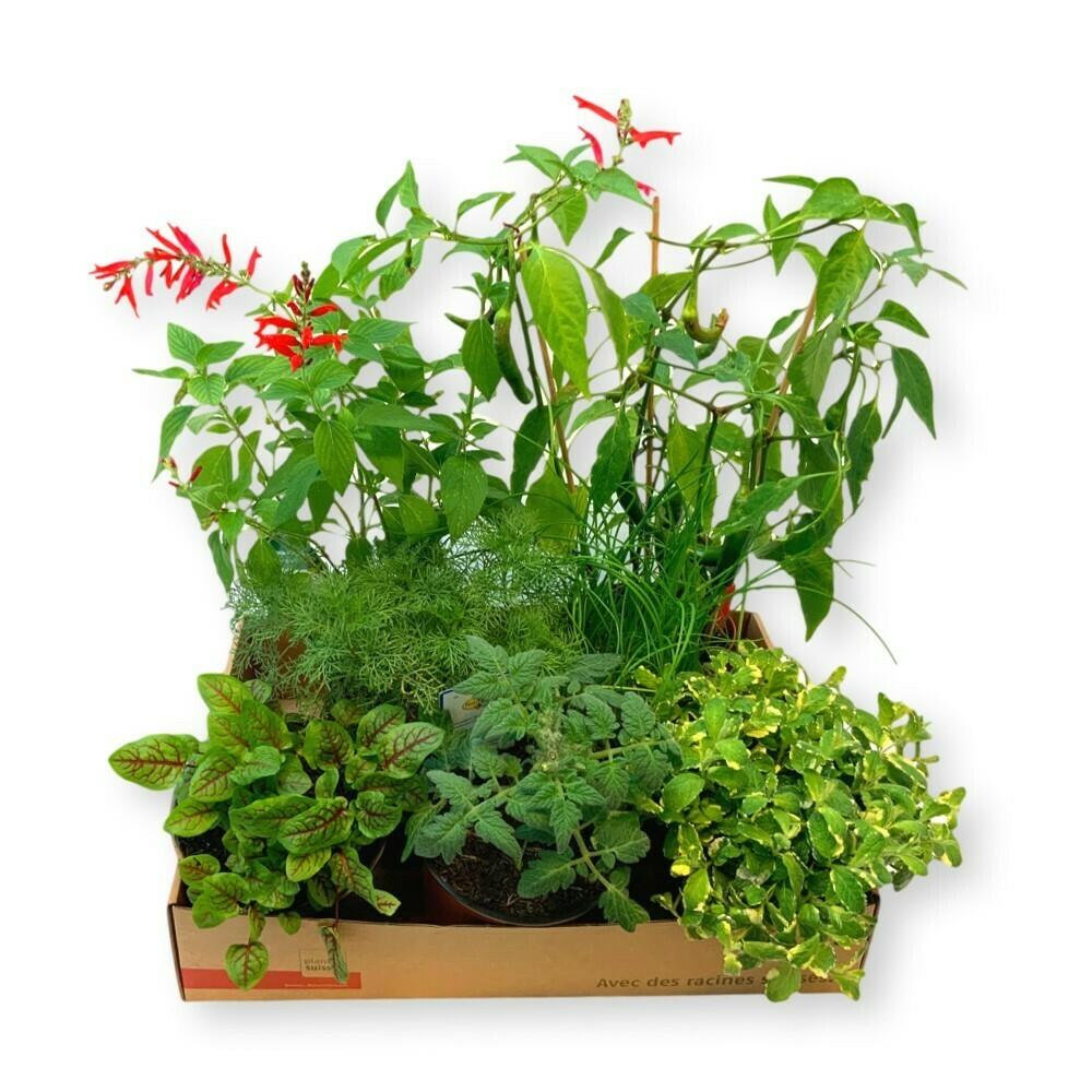 Kräuter- und Gemüsebox