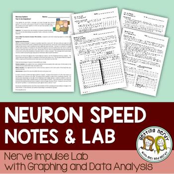 Nervous System - Neuron Speed Lab