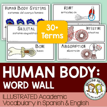 Human Body Systems - Word Wall