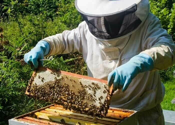 Miel de fleurs - 500gr