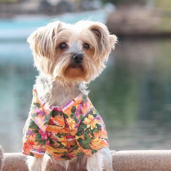Hawaiian Camp Shirt - Sunset Hibiscus
