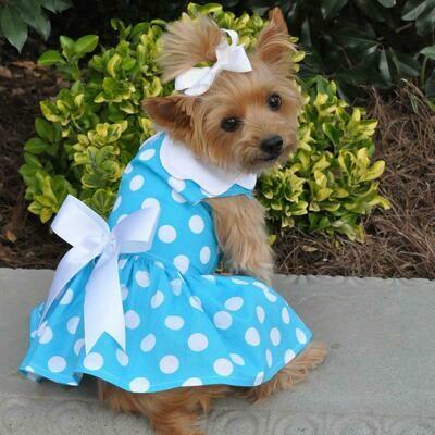 Blue Polka Dot Dog Dress with Leash