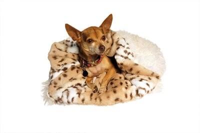 Snow Leopard & Cream Shag Cuddle Pouch