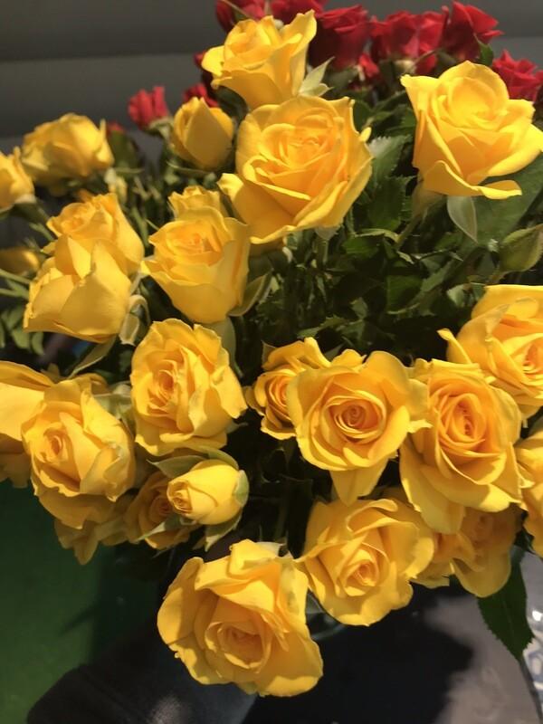 Роза кустовая 40 см жёлтая
