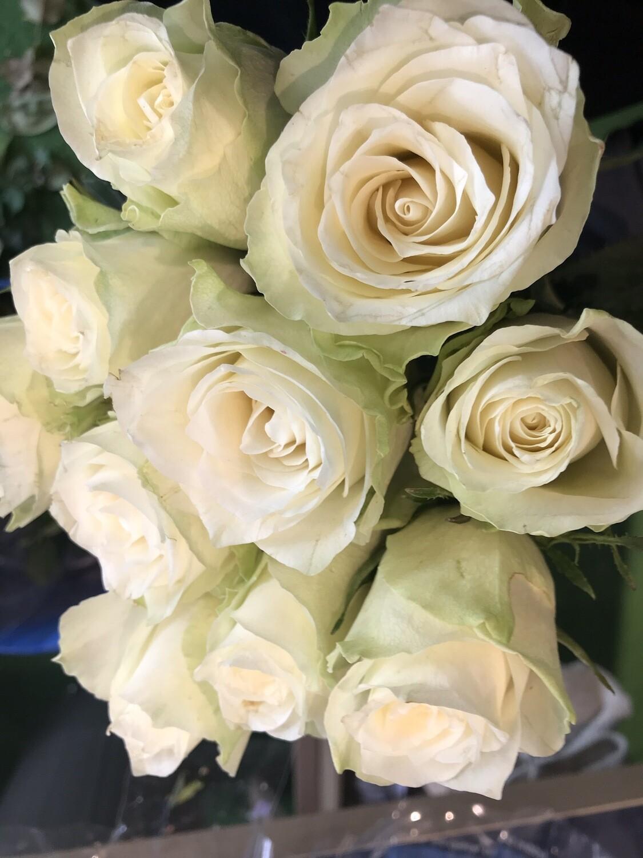 Роза атена 50см