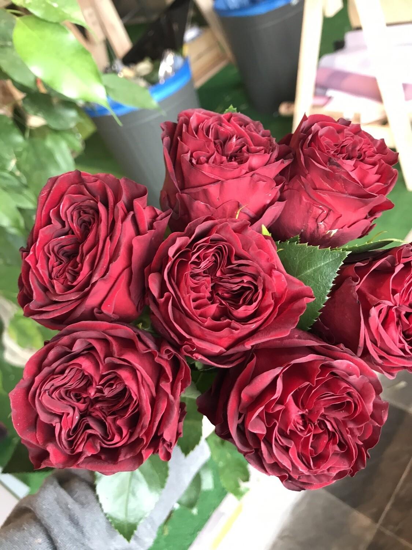Роза майрас рэд