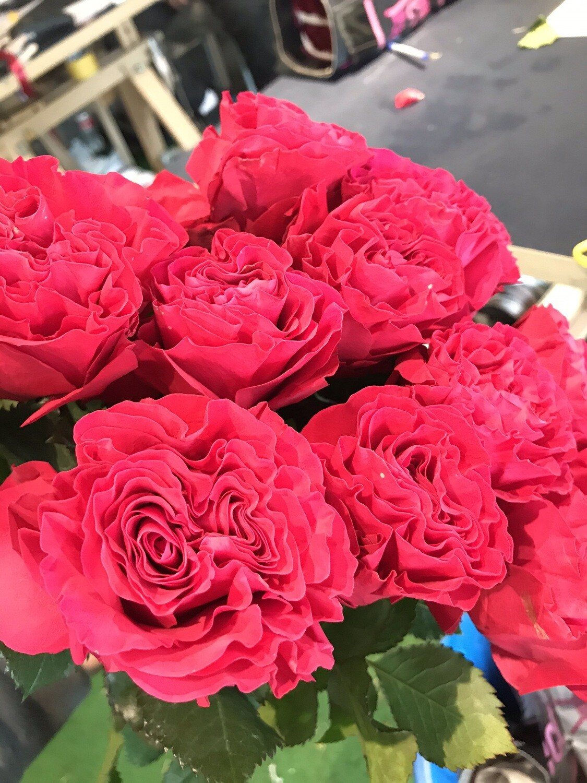 Роза майрас роуз