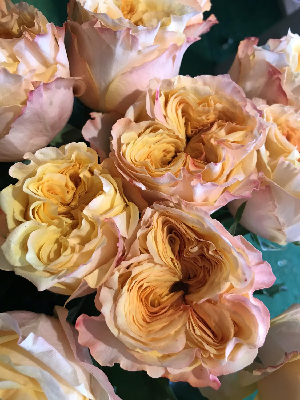 Роза вэддинг экспрешен