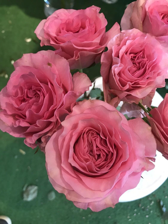 Роза майрас пинк хартс