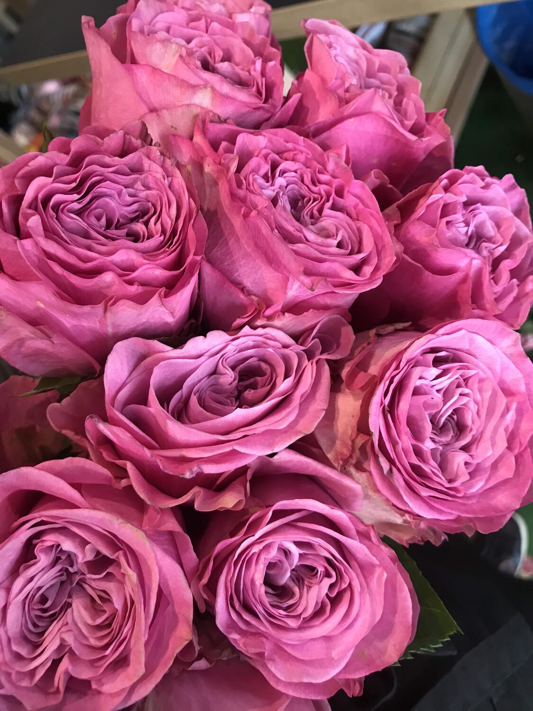 Роза Квинс краун