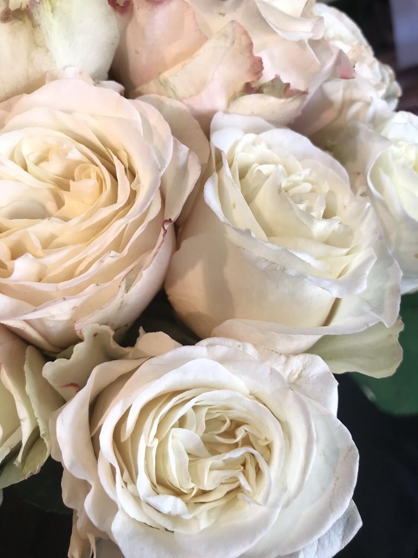 Роза вайт эшли