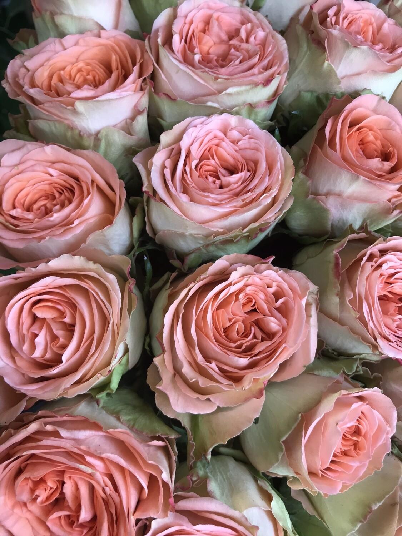 Роза кантри хоум