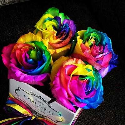 Le Petite Anne - Pride, Proud & Love