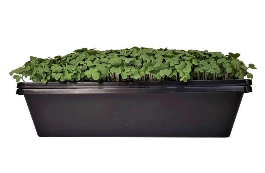 Microgreens Tray 10X10