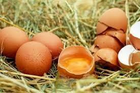 Free Range Eggs 1 x 60